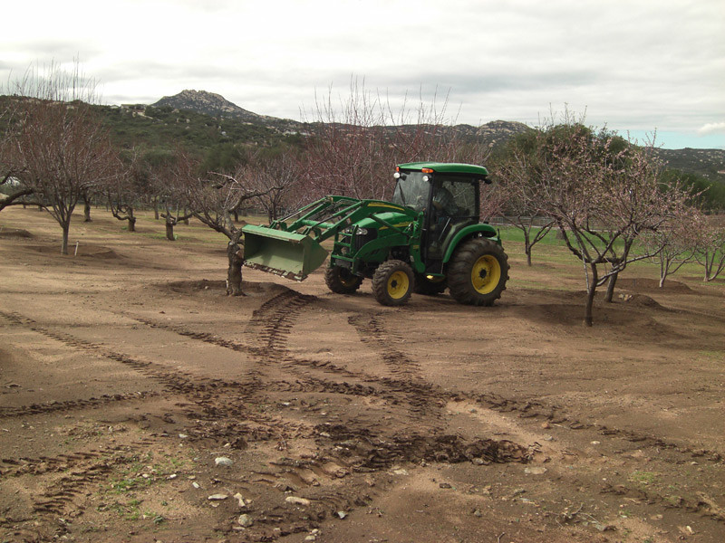 Another day at the ranch, today's task - remove dead trees from the orchard. January 27, 2010