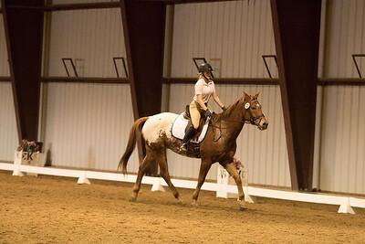 Horse 629