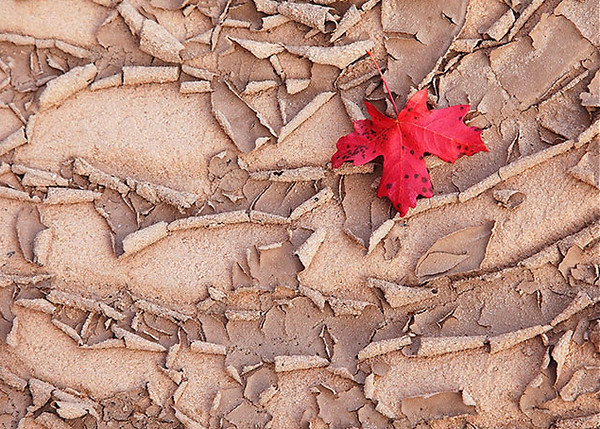 Mud cracks in Fall.jpg
