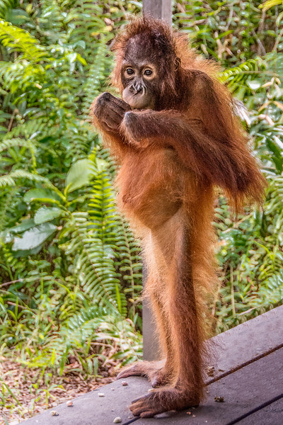 Borneo-2242.jpg