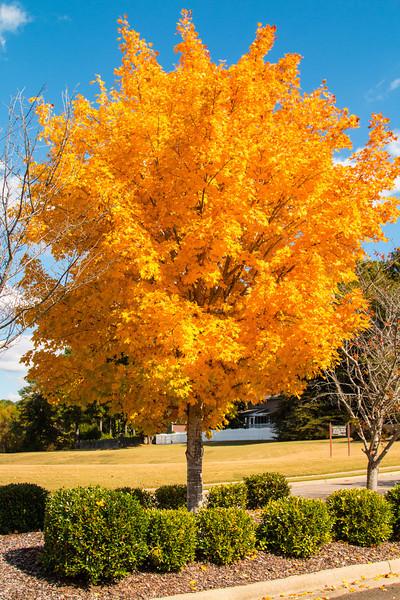 2013 Fall Color & Dog Show