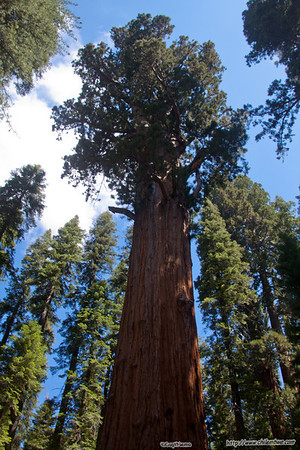 Sequoia National Park, July 2012