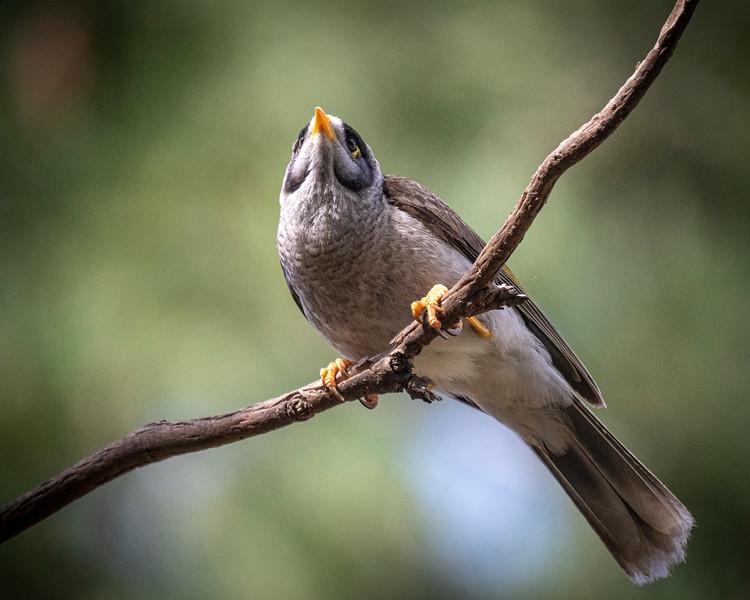 birds  000128.JPG