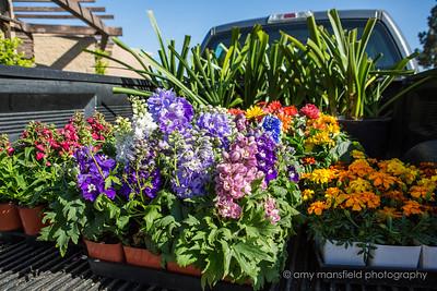 May 2018 Vista Garden Club Flower show