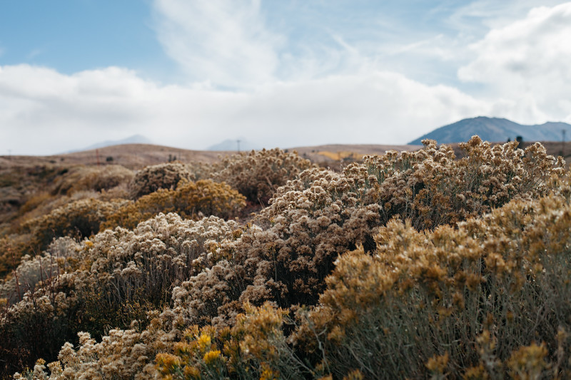 Steppe flora