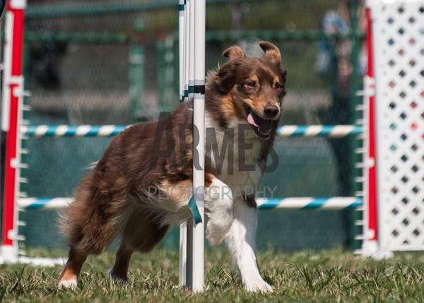 ASCA Agility Trial, March 30, 2013, Mebane, NC