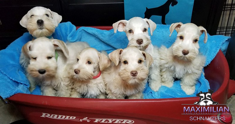 Bianca Pups 002.jpg