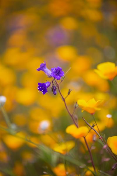 Spring Flowers B-99.jpg