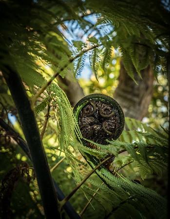 Queen's Gardens, Nelson NZ