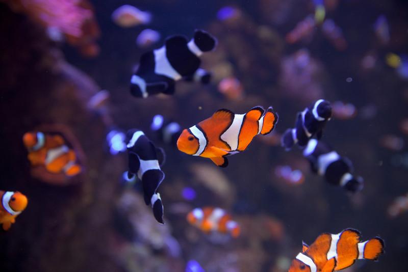 2009 10/17: Aquarium of the Pacific