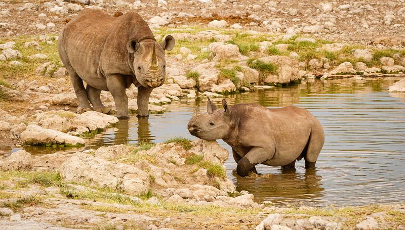 Rhino scenes 2