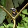 Reserva El Jaguar Nicaragua