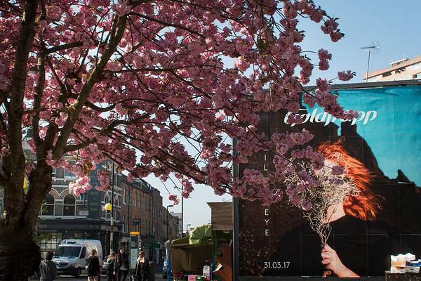 2017 04.London in blossom