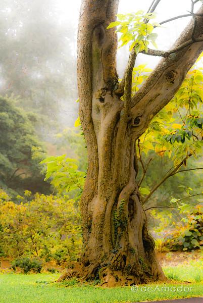 Cylburn Arboretum-aeamador-004074.jpg
