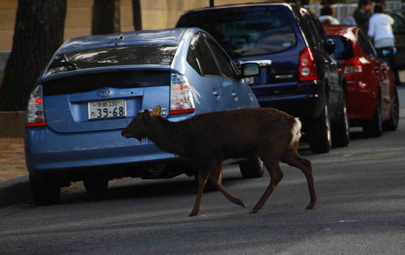 Nara Siku Deer running through the street  (C) 2009 Brian Neal