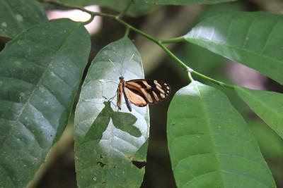 Unknown Butterflies
