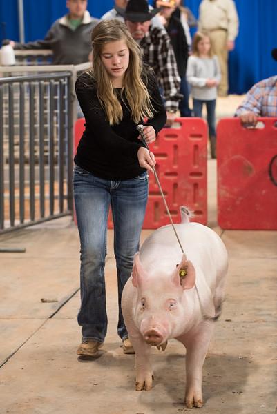 Hays County Show-0449.jpg
