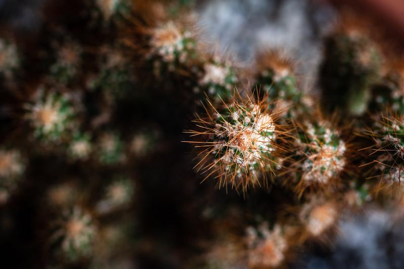 Cactus-7970.jpg