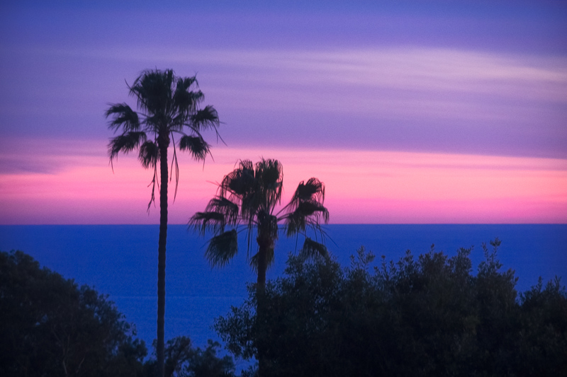 January 21 - Palm trees and a sunset, Los Angeles.jpg