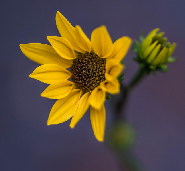 Simple yellow flower
