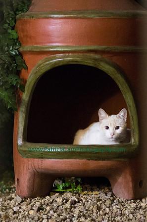 Pussycat & domestic animals