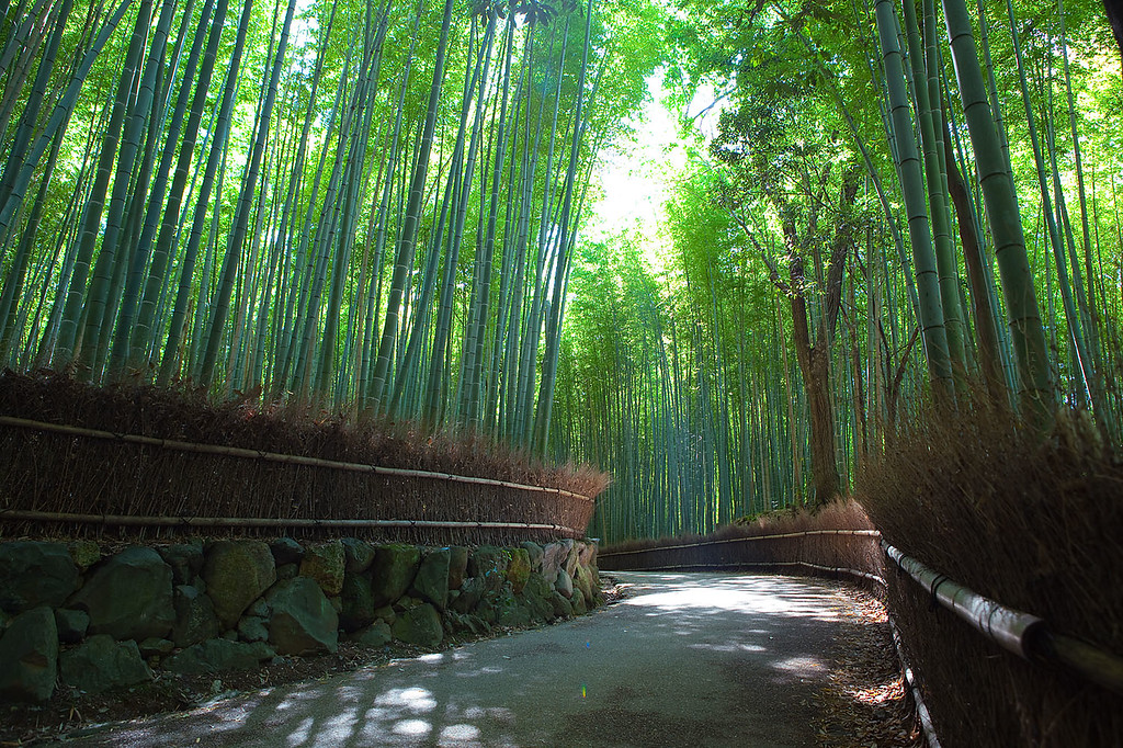 Sagano Bamboo forest, Arashiyama, Kyoto