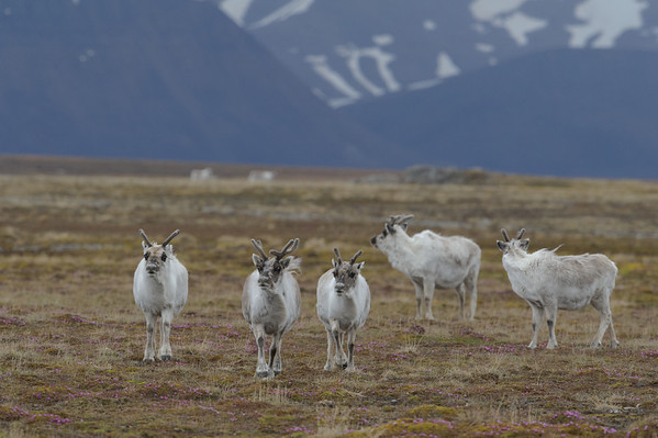 Svalbard Norway 2011
