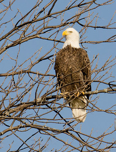 This eagle saw me the minute I stopped the car.