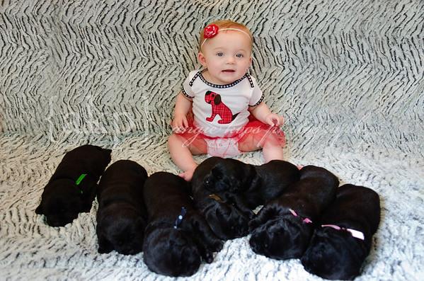 Stella & 7 Puppies