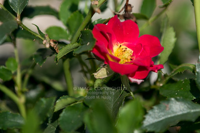 07/26/15 Flowers