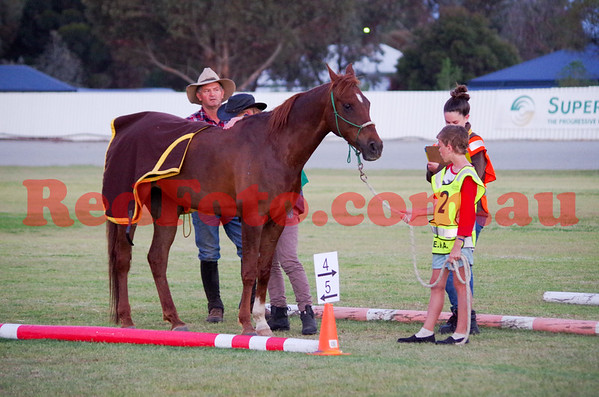 2014 10 04 Tom Quilty Gold Cup Endurance Saturday Vetting