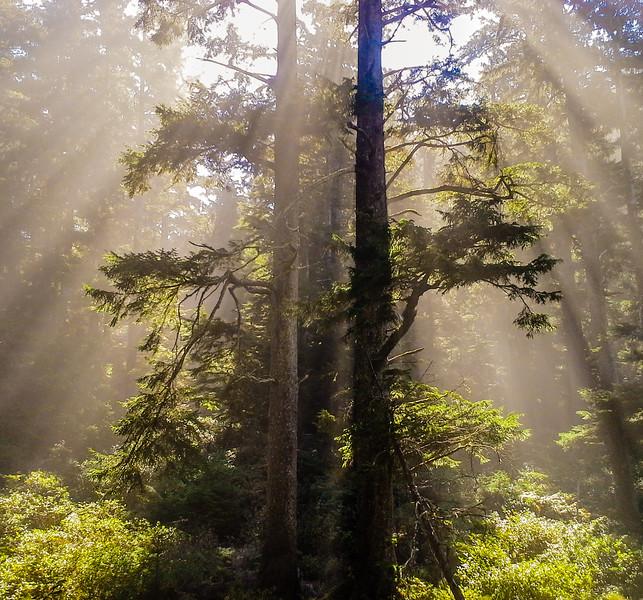 Treelight-4.jpg