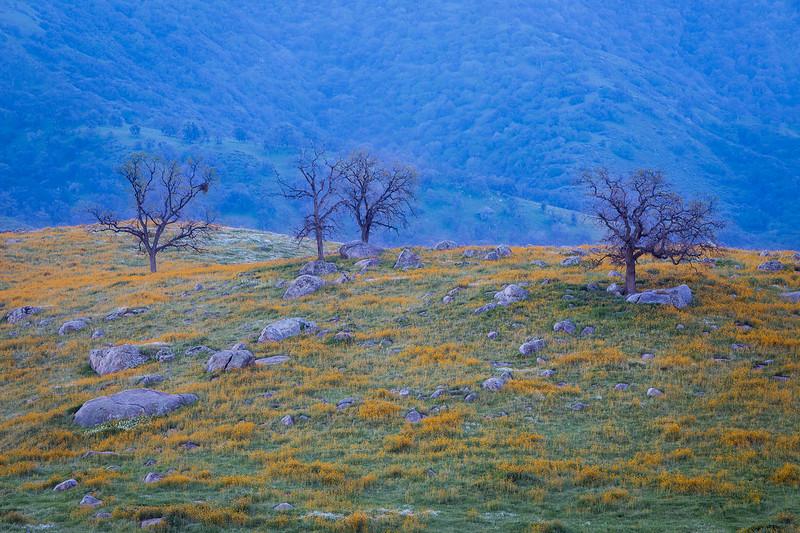 Bear_Mountain_Wildflowers_Southern_California_MG_1966.jpg
