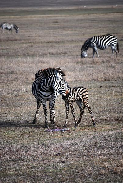 Ngorongoro (3).JPG