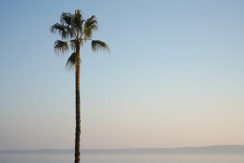 palmtree_DSC00222.jpg