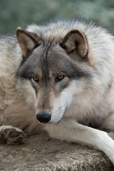 Seacrest Wolves_-24.jpg