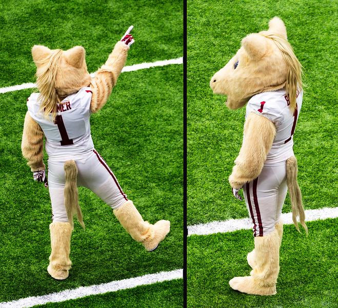 The Oklahoma Sooner's horse mascot