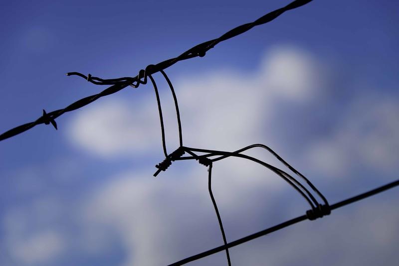 Fenced 3