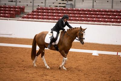 Horse 103