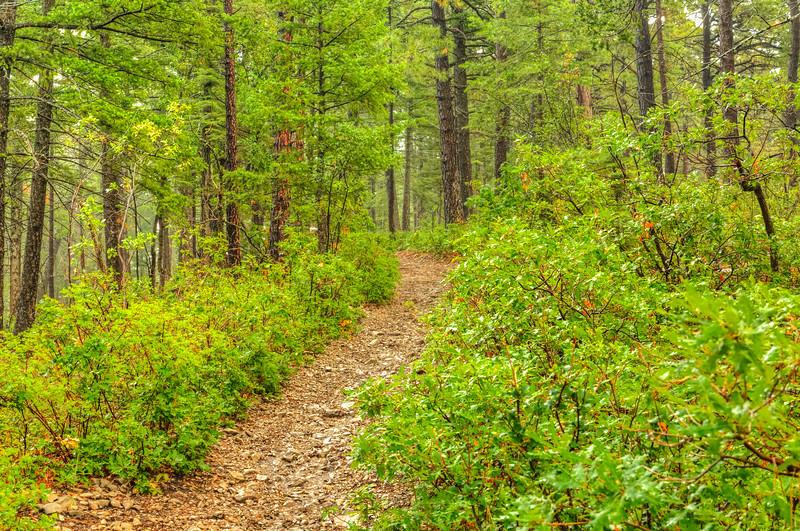A trail close to Mayhill