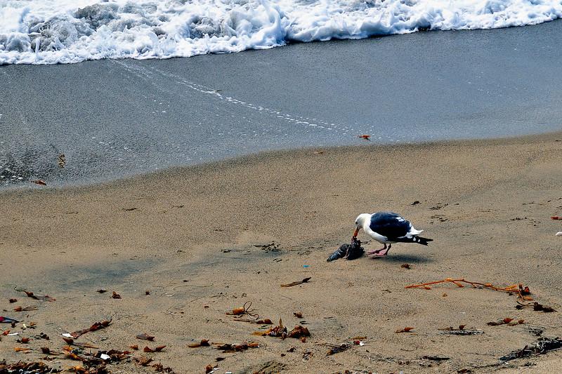 Redondo Beach Pier-18.jpg