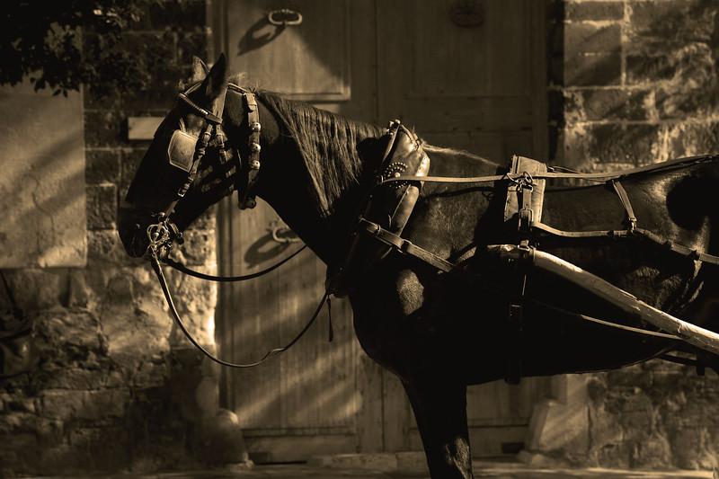 horse_sepia.jpg