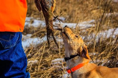 Nebraska State Pheasant Championship - Mar 2013