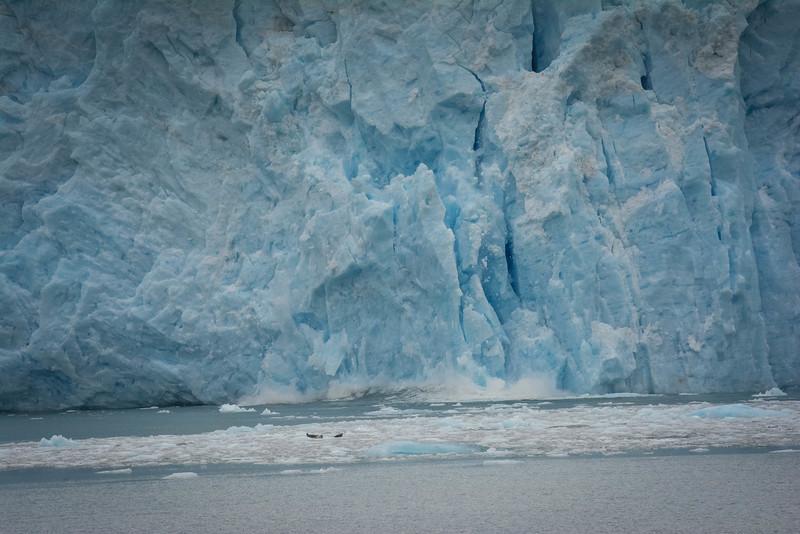 Kenai-Fjords-86.jpg