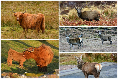Animals North Coast 500