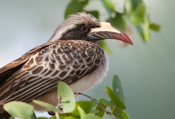 Kruger Birds 2010