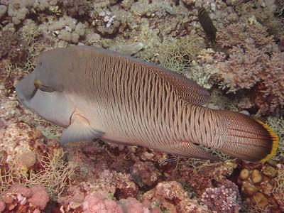 20120527 Dive, Habili Sorayer (Jaffer)