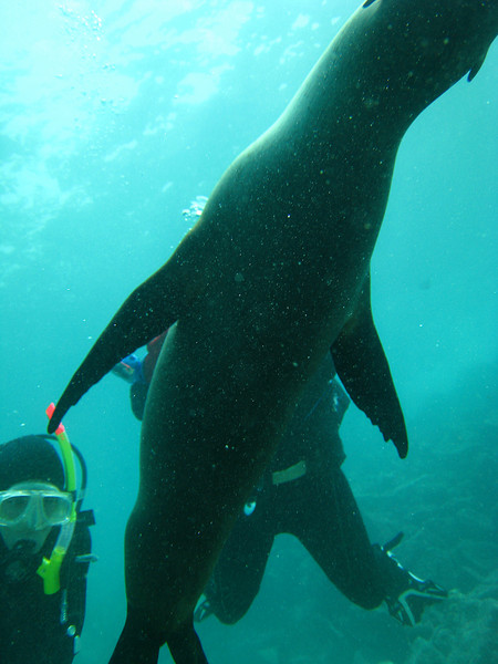 Diving in the Galapagos (296 of 392)