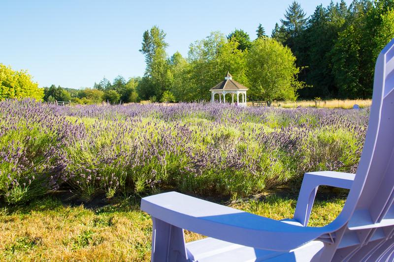 Evergreen Lavender Farm-20.JPG