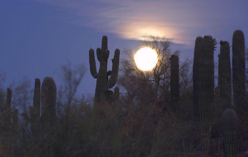 Moonrise over the Phoenix Botanical Garden.